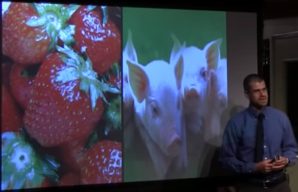 The Food Matrix – 101 Reasons to Go Vegan